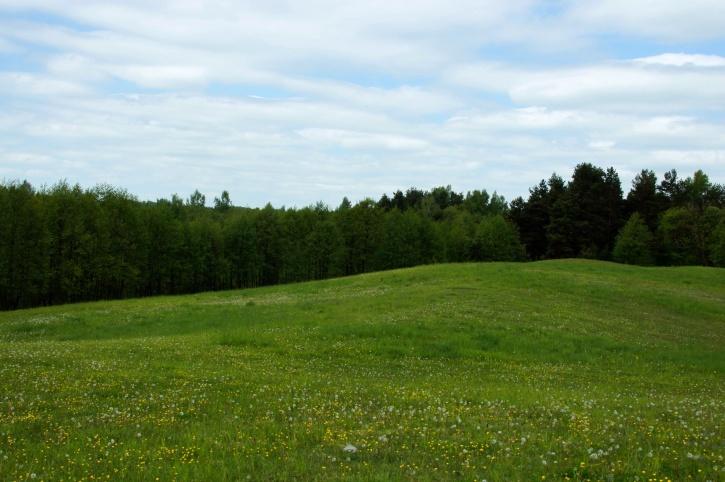 green grass, field, summer, meadow, trees