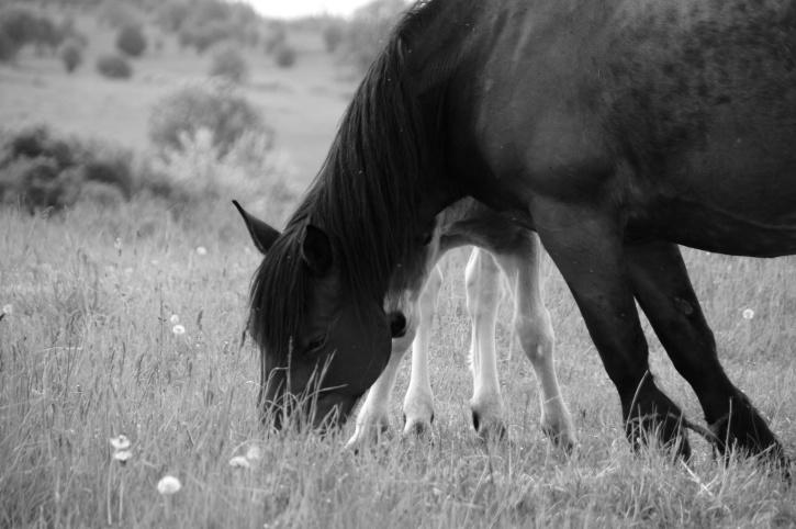 horse, eating grass, animal, farmland, black horse