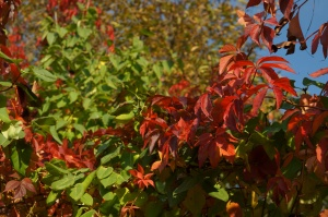 multicolored leaves, autumn