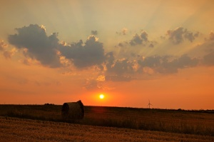 sunset, nature, landscape, sky, day, field, hay, bale, crops, agriculture, dusk