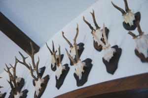 trophées de chasse, mur, cornes, bois, chasseur