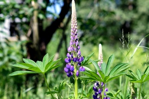 purple flowers, wildflowers, blooming, spring