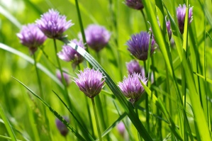 wildflower, green grass, meadow, field, grass