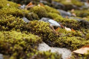 green moss, close, green plants