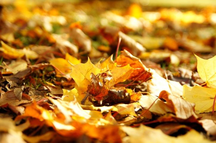 yellow leaves, ground, autumn