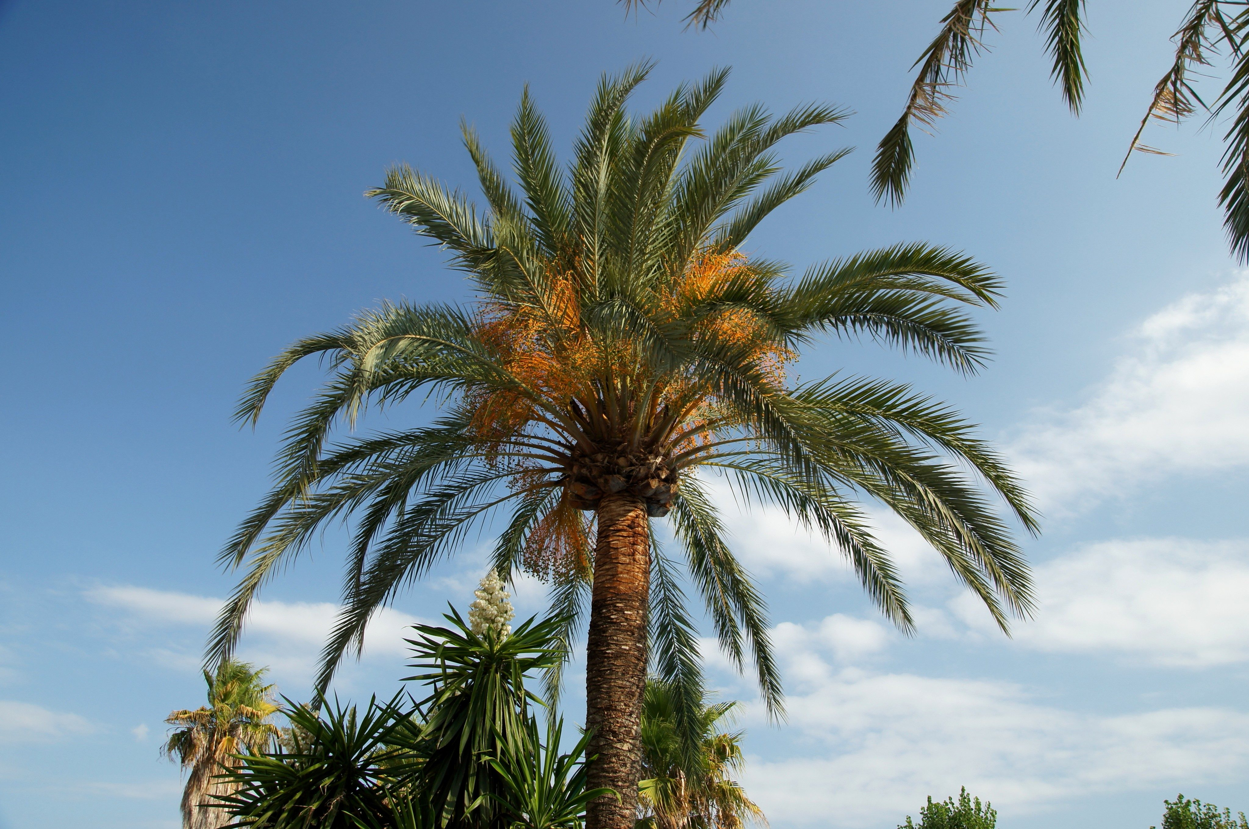 free picture palm tree flora trees vegetation summer time