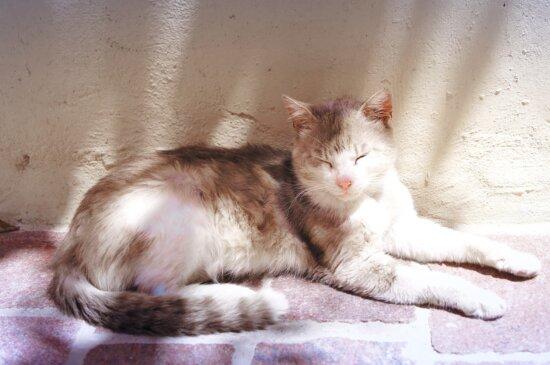 young cat, pet, kitten, sleeping, outside, sunrays