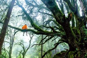 тропических лесов, деревьев, дерево, ветви, лес, человек, природа