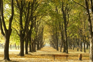 avenue, trees, autumn, forest path, garden, urban area, forest
