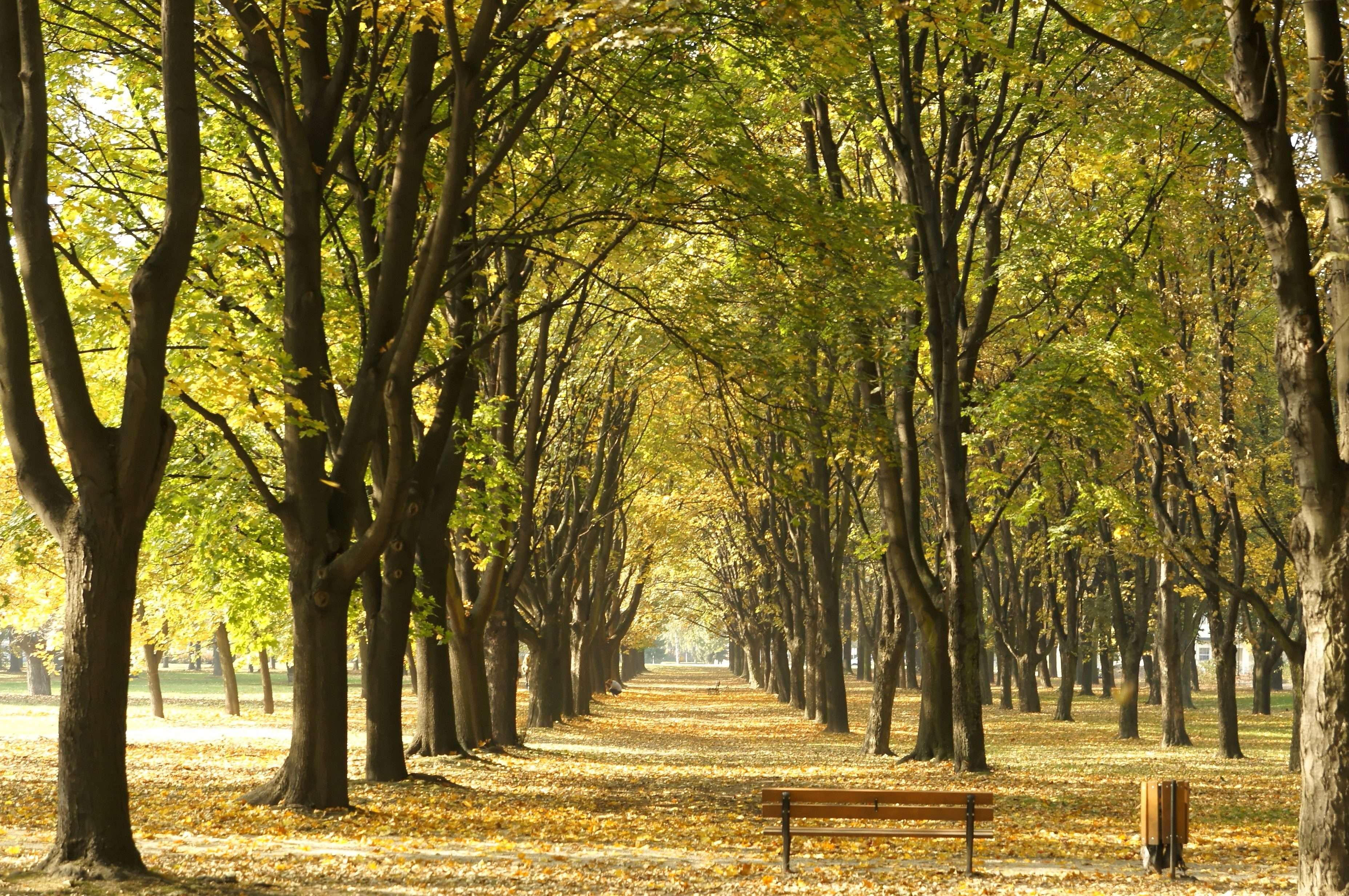 Free picture: avenue, trees, autumn, forest path, garden, urban area ...