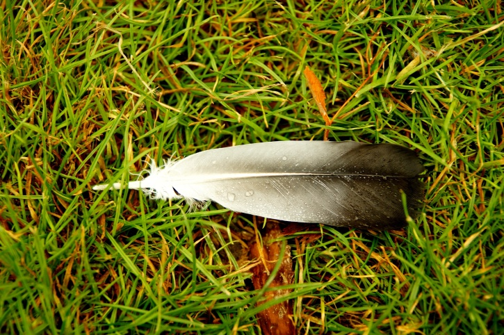 duck feather, lying down, grass