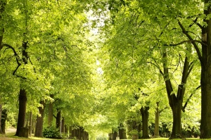 park, alley, springtime, park, urban, trees, green leaves, forest