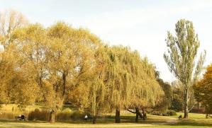 park, autumn, urban