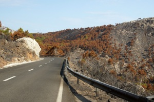 road, burned forest, nature, travel