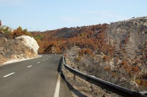 road, burned forest, nature, travel