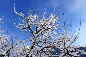 snow, snowflakes, branches, trees