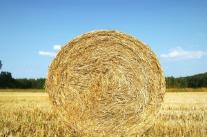 crops, agriculture field, straw bales, field, hay, summer time, blue sky, clouds