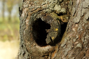 tree trunk, hole, tree bark, cortex