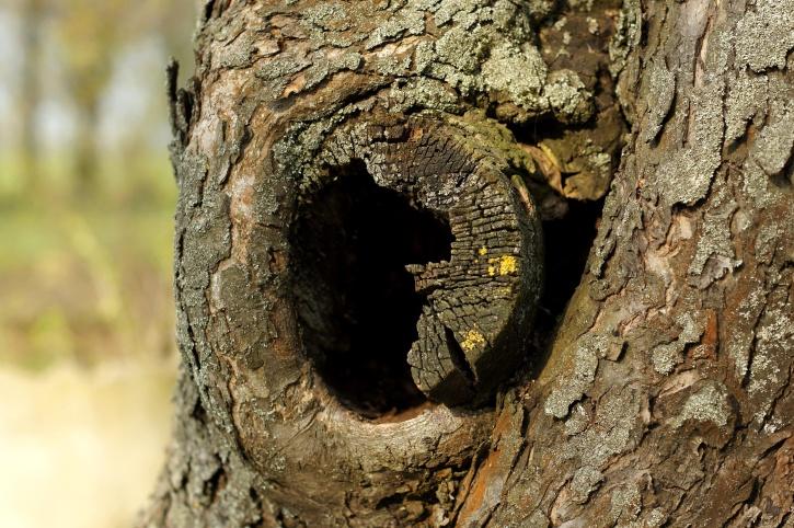 tronc d'arbre, trou, écorce d'arbre, cortex
