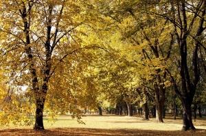 foresta, alberi, foglie gialle, autunno