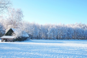 winter, landscape, trees, snow, field, barn house, sunny day