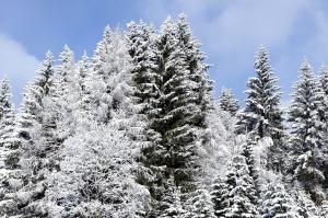 winter, trees, snow, blue sky, nature, snowflake