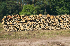 forest, wood, firewood, cut, piled wood, tree trunks