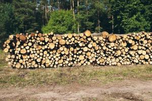 bosque, madera, leña, corte, madera apilados, troncos de árboles