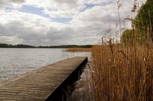 wooden pier, lake, marshland, swamp