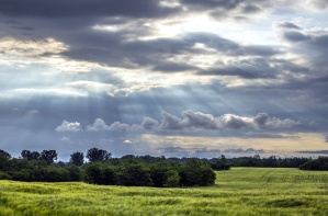 village, sky, trees, field, grass, clouds, nature
