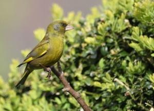 bird, exotic, songbird, rainforest, branch, green, animal