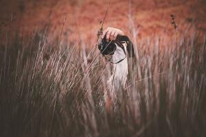 man, grass, field, summer, hay, photographer