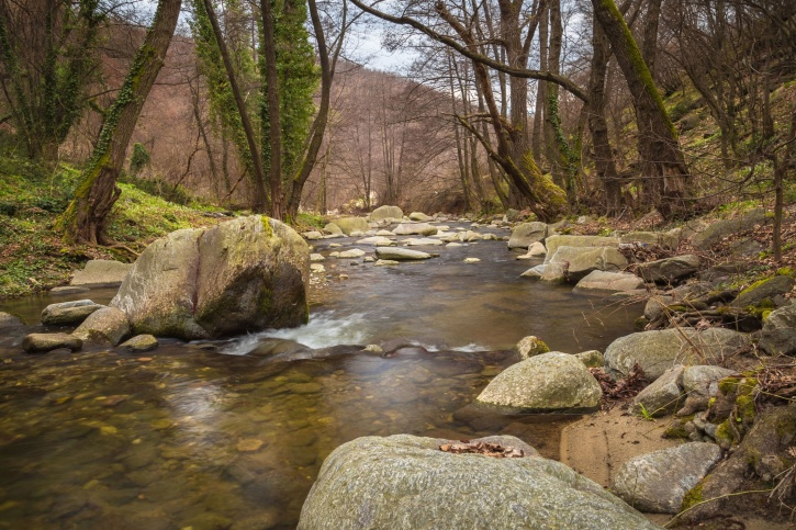 river, stream, trees, water, woods, stones, summer