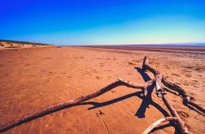 плаж, пустиня, земята, клон, driftwood, небе, свободно, сам, пейзаж