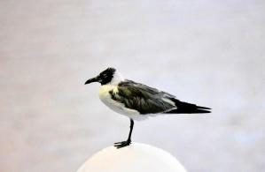 pták, ornitologie, volně žijící zvířata, zvíře