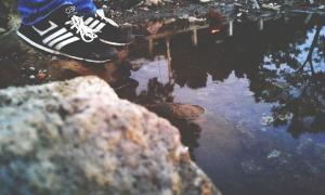árboles, agua, zapatos de deporte, casual, calzado, lago