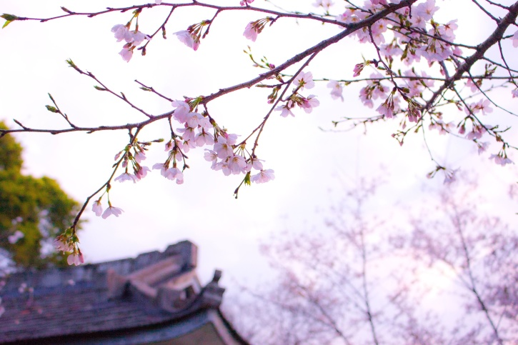 Kostenlose Bild: Sonne, sonnig, Baum, Blüte, blau, Himmel, Frühling