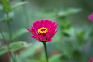 flowers, flora, nature, floral, flower wallpaper, summer
