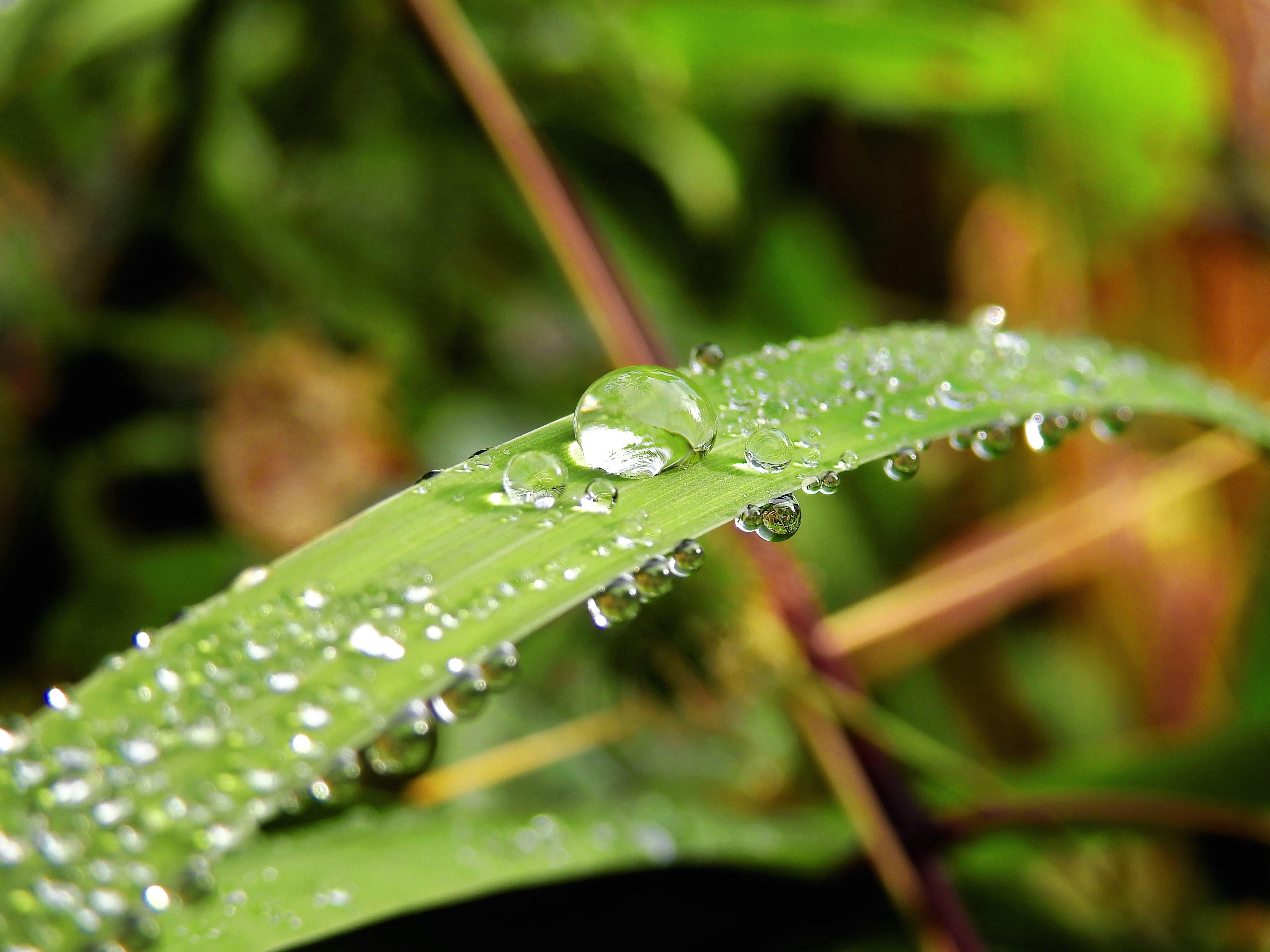 Kostenlose Bild: Natur, Pflanze, Wasser, Tau, grünes Gras