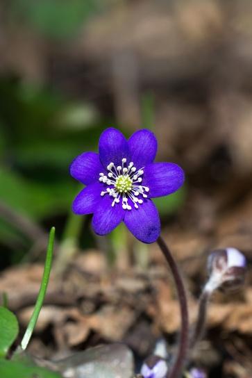 nature, plant, flora, flower, bloom, color, petals, pistil, pollen