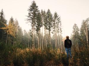 man, nature, pine trees, woods, fir