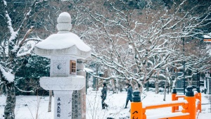 人々、公園、レクリエーション、雪、木々、冬