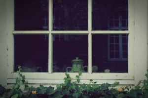 plant, wooden window, glass, ivy plants