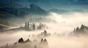 borovice, stromy, počasí, mlha