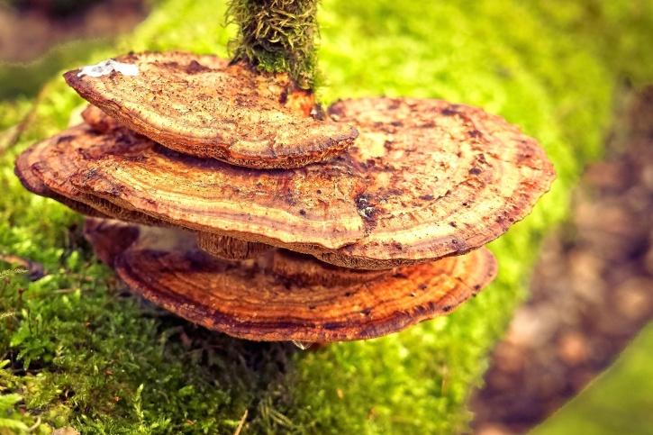 gljiva, trava, zeleni, rasta, mahovina, gljiva