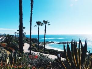 moře, agáve, kaktusy, modrá obloha, pláž, léto, pobřeží