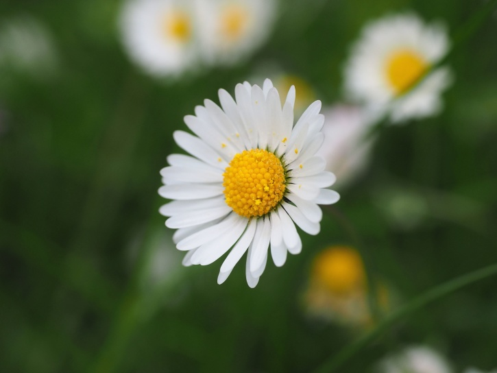 white petaled, flora, flowers, focus, petals, pollen