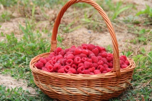 raspberries, summer, fruit, basket, green grass, sweet, wicker basket, wood