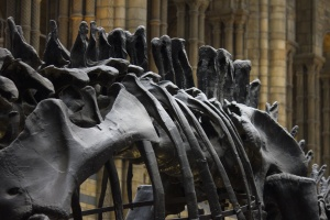 dinosaur, history, museum, bones, sculpture, statue
