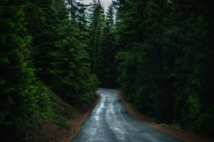 trees, woods, forest, road